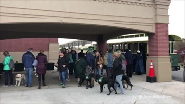 Service dogs-in-training practice being in crowds