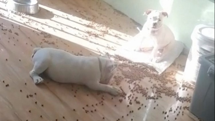 Guilty Looking Pups! These Adorable Doggies Try Really Hard to Look Innocent After Making a Mess
