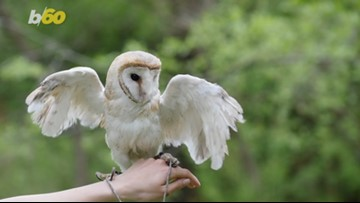 Birds of Prey! Russia Disguised a Drone to Look Like an Owl to Fool its Enemies