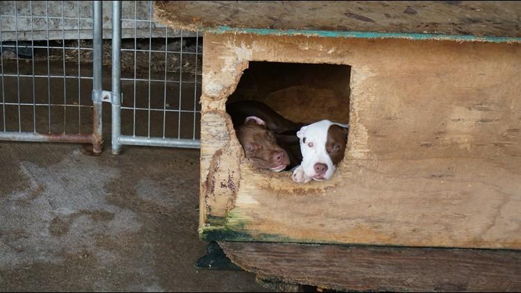 Wis animal cruelty 4_1536251780369.jpg.jpg
