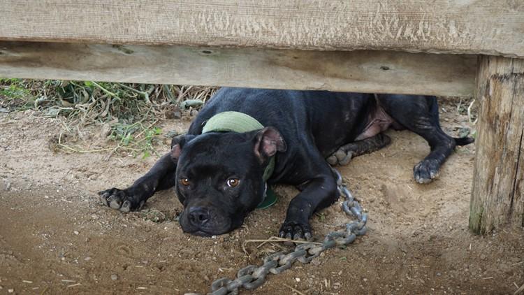 Wis. animal cruelty 2_1536251794625.jpg.jpg
