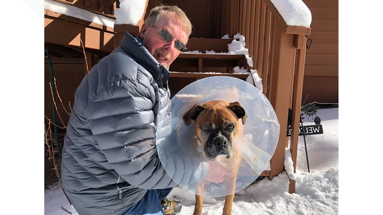 Man in Colorado fights off mountain lion that was attacking his dog