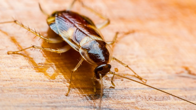 Horror as woman wakes up to find live COCKROACH in her ear