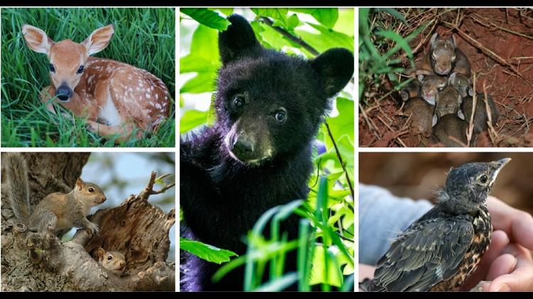baby animals_1526658596753.JPG.jpg