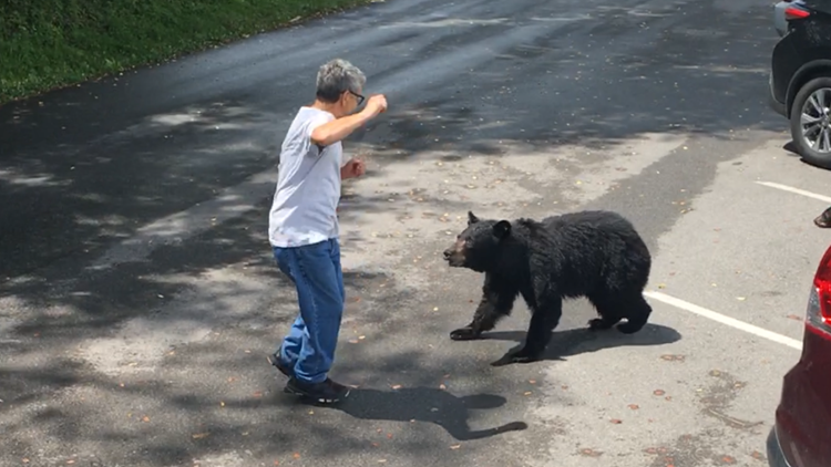 Momma bear lunges at man who gets too close