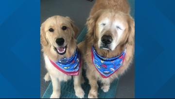 'I miss my big man so much' | Senior dog who became social media sensation passes away