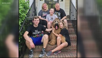 Family out nearly $14,000 because of vicious service dog