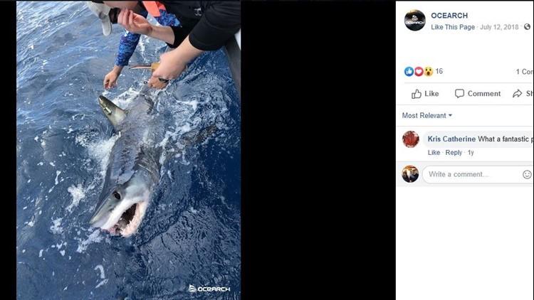 Pico The Mako Shark Makes Stop Near North Carolina S Outer Banks 13newsnow Com