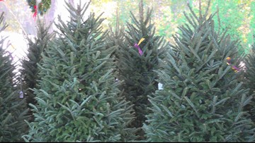 Trees for Troops distributes 600 trees at Joint Expeditionary Base Little Creek-Fort Story