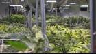 Florida's first drive-thru marijuana dispensary opens in Palm Harbor, company says