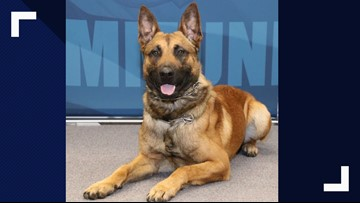 Wisconsin Police K-9 undergoes surgery after being stabbed multiple times