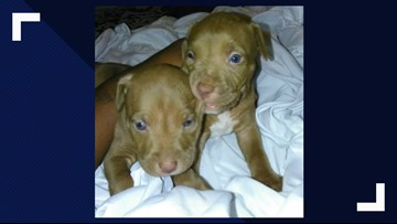 Woman robbed at gunpoint for her 2 puppies