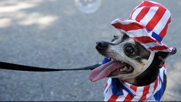 Safety tips: Here's how to protect pets from Fourth of July fireworks