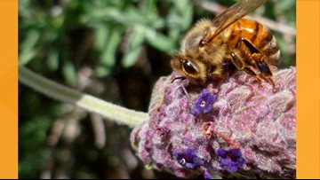 Buzzzz out at the 9th Annual Virginia Honey Bee Festival this weekend