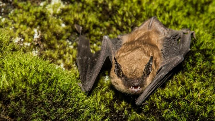 Three children touch rabid bat in Suffolk