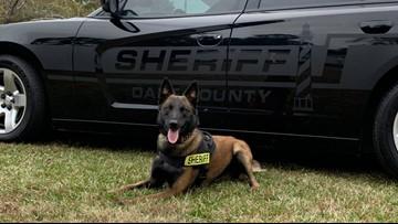 Dare County Sheriff's Office K9 Sorbi to get donation of body armor