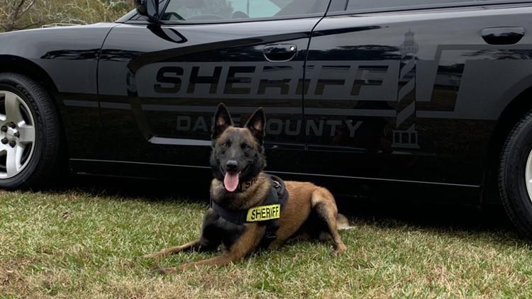 Dare County Sheriff's Office K9 Sorbi