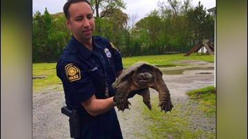 Portsmouth police officer saves turtle from getting hit by traffic