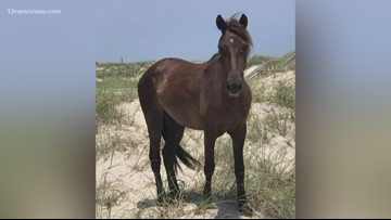 Wild Mustang Corolla Wild Horse Fund was treating, euthanized
