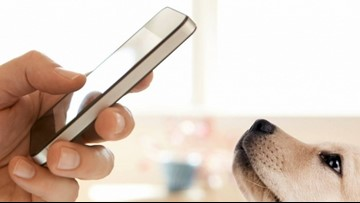 Norfolk Animal Care and Adoption Center to use facial recognition technology for lost pets