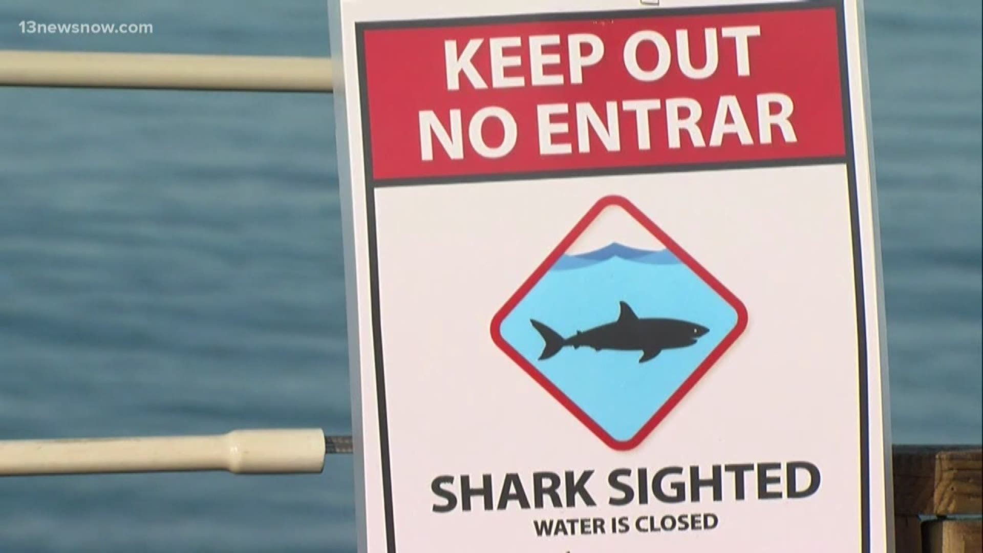 Sharks Are Showing Up Off The Carolinas As Winter Approaches 13newsnow Com
