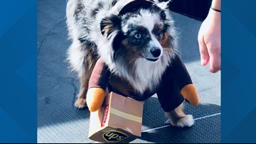 Pups compete in pet costume contest for Malloween On The Boolvd Pawchella