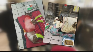 Push to change animal cruelty charges