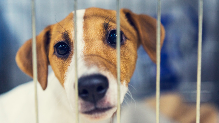 'Party for the Animals'   Virginia Beach SPCA honors homeless animal adoptions