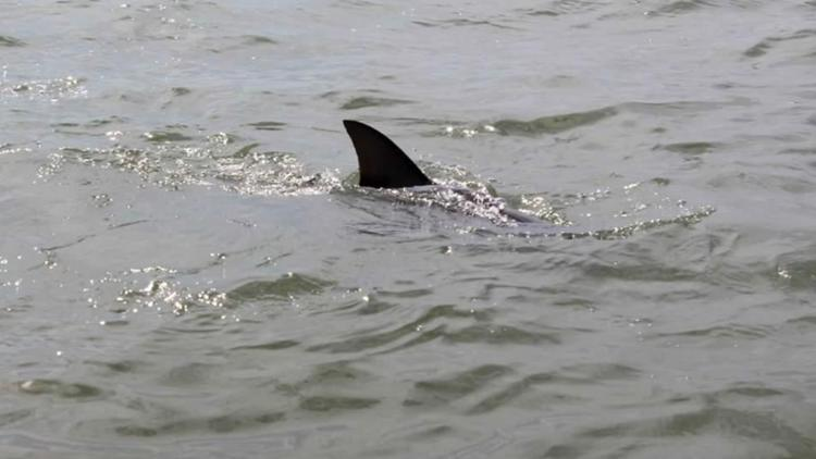 16 Year Old Boy Bitten By Shark Off Outer Banks 13newsnow Com