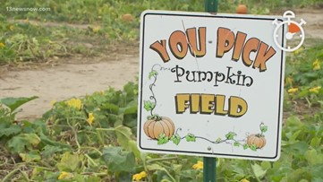 Daybreak 60: How do you pick the perfect pumpkin?