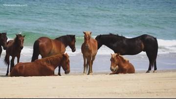 Corolla Horse Fund holds calendar contest