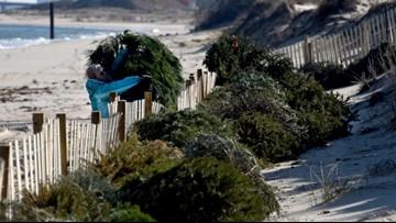 Christmas trees used to replenish JEB Little Creek sand dunes