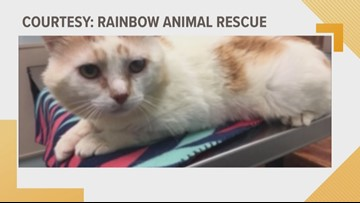 Shelter Sunday: Meet Tommy. He's looking for a forever home.