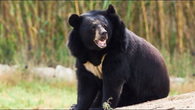 Man who wanted selfie with bear gets mauled to death
