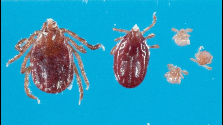 Exotic New Jersey tick now in Virginia