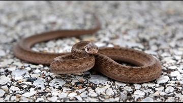 Snake slithers into middle school, bites student