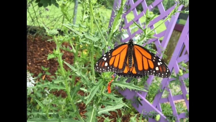 Norfolk Botanical Garden celebrates the 5th annual Butterfly ...