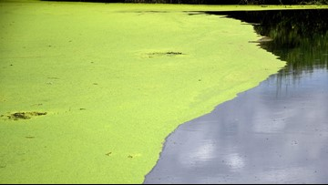 NC health officials warn people to stay away from toxic algae blooms reported as close as Arrowhead Beach