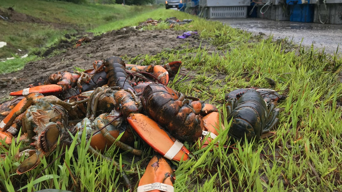 Permission denied for PETA to honor dead lobsters with roadside gravestone