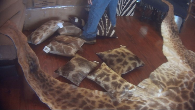 A report found 40,000 giraffe parts and products were imported into the U.S. from 2006 to 2015.