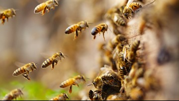 Bee Aware: Spring is heating up and the bees are back