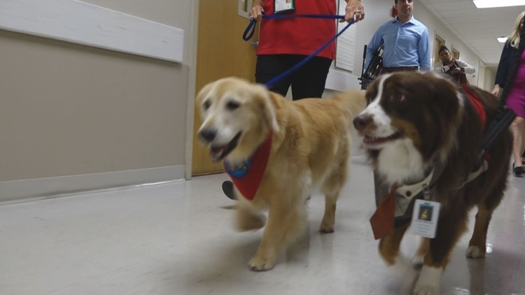 BENTLEY'S CORNER: Hospital Therapy Dogs