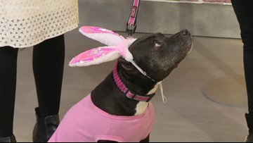 Shelter Sunday: Rainbow Animal Rescue hosting Easter Photos event