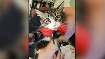 Shelter Sunday: Meet Lightning who is looking for a fur-ever home