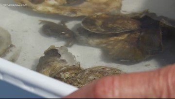 SCIENCE BEHIND: Oyster Water Filtration—a natural filtration method
