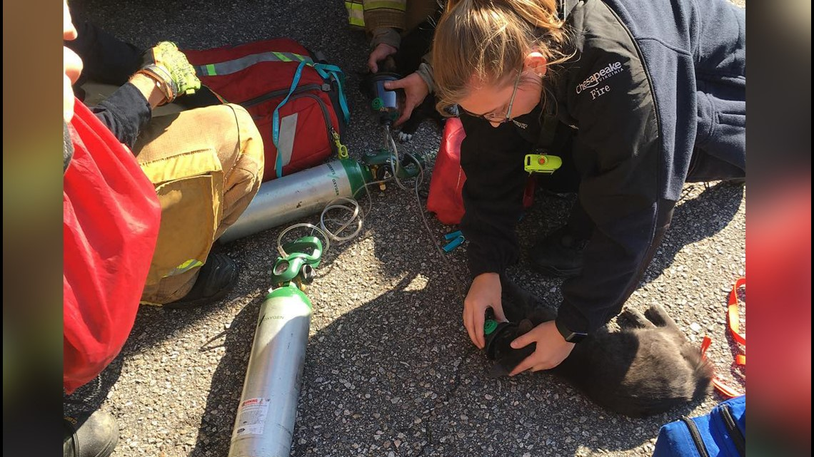 PHOTOS: Four pets rescued and revived in Chesapeake house fire