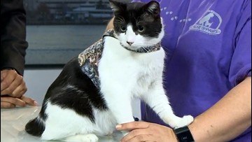 Shelter Sunday: Florence the cat is looking for his forever home