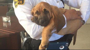 Portsmouth Police Department needs help naming its new K9 puppy