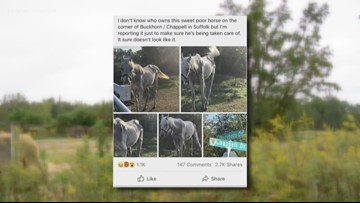Suffolk emaciated horse pictured on social media has been euthanized