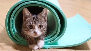 Kitten yoga bringing purrs, inner peace to MacArthur Center
